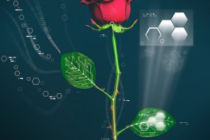 A kind of cyborg flower through their vascular systems