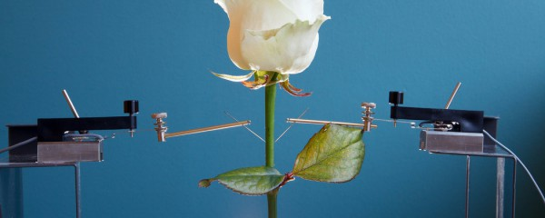 Research electronic circuits into living plants to help regulate plant physiology